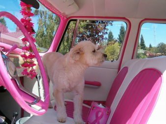 two toned pink car upholstery
